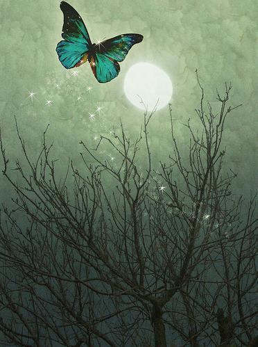 my beauty Butterfly